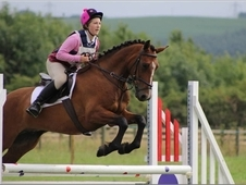 Attractive Irish Sports X, Loves Jumping And Hunting! Reduced!!