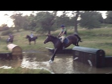 Talented Bay Mare