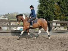 15. 2hh Coloured By 'STORMHILL MINK' For Sale