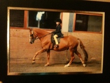 Riding Club Horses/Ponies horse - 17 yrs 14.0 hh Chestnut - Merse...