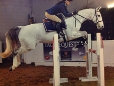 Talented Show Jumper. Bred To Perform