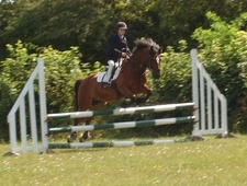 All Rounder horse - 17 yrs 13.2 hh Dark Bay - Surrey