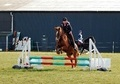 All Rounder horse - 18 yrs 1 mth 14.2 hh Chestnut - Nottinghamshire
