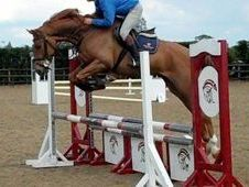 Sports Horse - 0. 0 Hh - West Midlands
