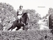 Top Eventing Potential, Very Smart 15. 3 Mare