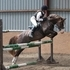 128cm 12.2 hh 6 year old  WelshX show jump/dressage.