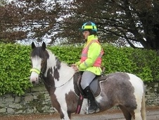 All Rounder horse - 9 yrs 4 mths 14.2 hh Coloured - Lancashire