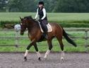 All Rounder horse - 10 yrs 16.3 hh Bay - Gloucestershire