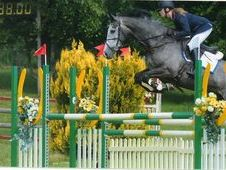 Stock Reduction Of Quality Showjump/ Event Youngsters Due To Preg...