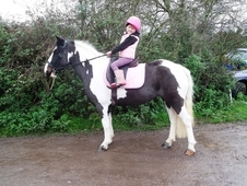 Super 13hh Coloured Mare