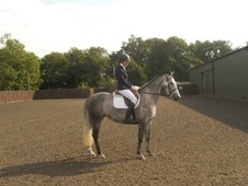 Dressage horse - 5 yrs 9 mths 15.1 hh Dapple Grey - Leicestershire