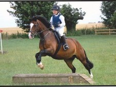 13. 2hh, 11 Year Old Registered Section C Bay Mare.