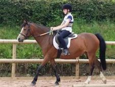 13. 2hh Welsh Section B
