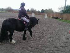 13hh 8yr Old Mare