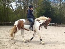 15. 1 coloured mare all rounder
