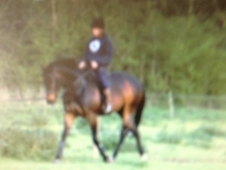 15. 2hh Thoroughbred Mare For Sale