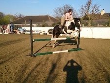 All Rounder horse - 8 yrs 15.2 hh Coloured - West Yorkshire