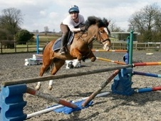 All Rounder horse - 8 yrs 13.1 hh Bay - Essex