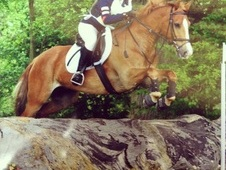 14. 1HH welsh all rounder
