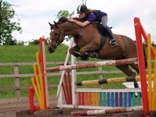 Honest Show Jumper - 14. 2 - Confidence Giver! Looking for a 'for...