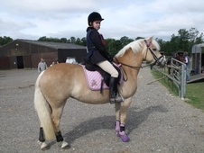 All Rounder horse - 9 yrs 14.0 hh Palomino - Buckinghamshire