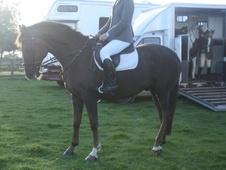 All Rounder horse - 12 yrs 15.3 hh Chestnut - County Durham