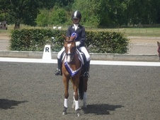 Pony Club Ponies horse - 19 yrs 14.1 hh Bay - Berkshire