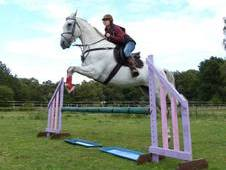 16. 2hh Ish Dressage Horse For Sale