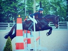 Fantastic 14. 2hh All Rounder
