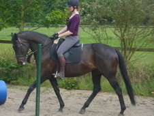 16'2 Thoroughbred Mare