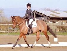 Exciting Event/Showjumping Prospect. OBOS Quality x Cavalier Roya...