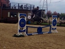 Riding Club Horses/Ponies horse - 7 yrs 15.2 hh Dapple Grey - Wes...