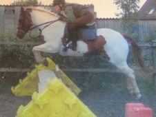 American Painted 14. 2 Hunting Mare