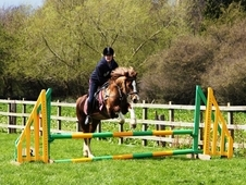 Welsh Section D, Chestnut Mare, 14. 1hh