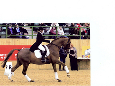 Elite Competition Stallion at Stud