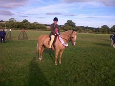 All Rounder horse - 9 yrs 8 mths 14.2 hh Palomino - Middlesex