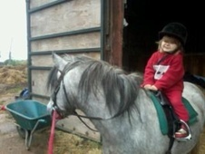 Young Stock  horse - 4 yrs 1 mth 11.0 hh Grey - Warwickshire