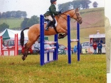 Pony Club Ponies horse - 13 yrs 14.1 hh Dun - Fife