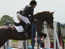 Riding Club Horses/Ponies horse - 11 yrs 15.3 hh Chestnut - Cheshire