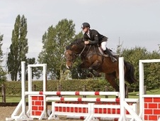 Eventers horse - 7 yrs 15.0 hh Bay - West Midlands