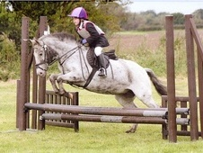 All Rounder horse - 12 yrs 12.1 hh Coloured - North Yorkshire
