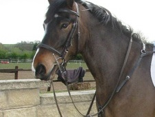 All Rounder horse - 4 yrs 14.2 hh Coloured - North Yorkshire