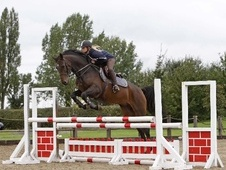Eventers horse - 5 yrs 16.0 hh Bay - West Midlands