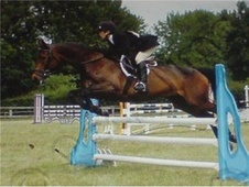All Rounder horse - 15 yrs 16.1 hh Bay - Norfolk