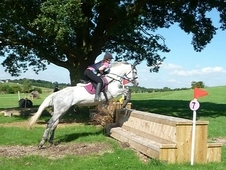 15. 1hh Talented Showjumper, PC/RC Allrounder