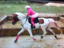 **reggie 5 Yo Ish Gelding. . . . Loose Stables At The End Of The ...
