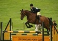 All Rounder horse - 13 yrs 1 mth 15.2 hh Bay - Cumbria