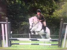13hh Super Allrounder Nfpb Pony Club Whp