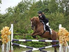 Beautiful Eventer For Sale