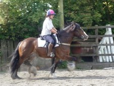 Eddie is a 6 year Old Gelding 14. 2hh